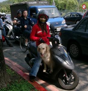 Hund Transport auf Roller