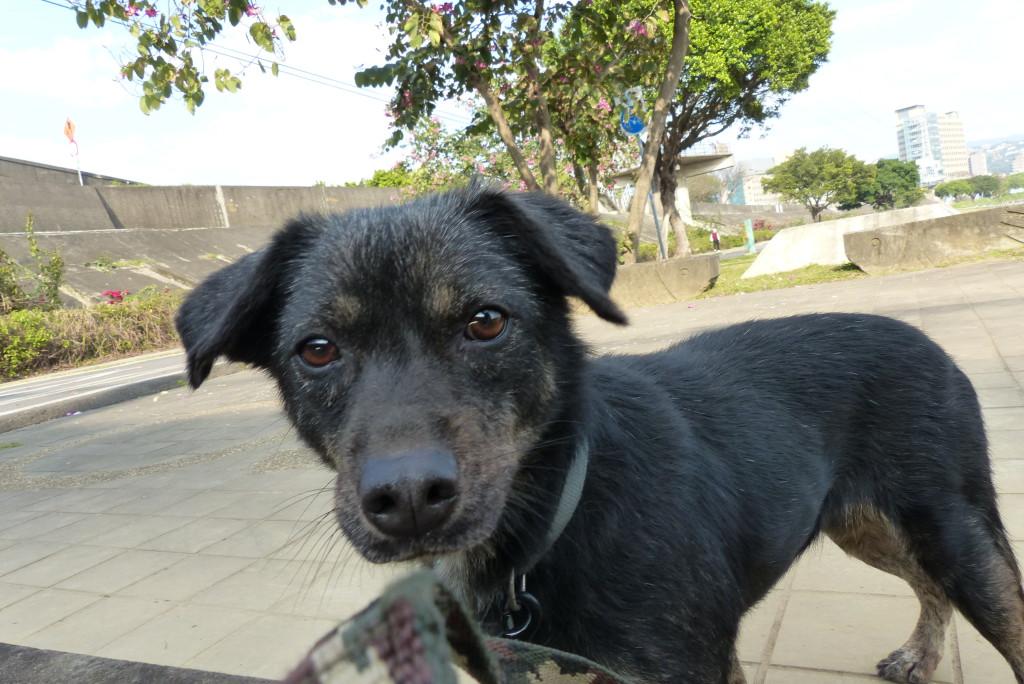 Sophie, Hund aus dem Tierheim