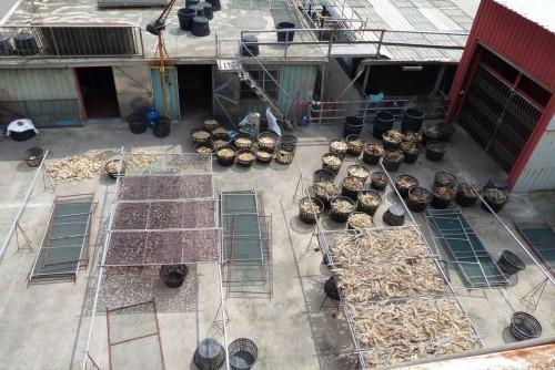 Haifischflossen Dach Taiwan