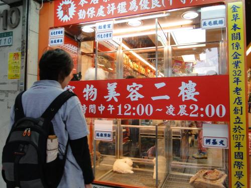 Hunde Tierhandlung Schaufenster Taiwan