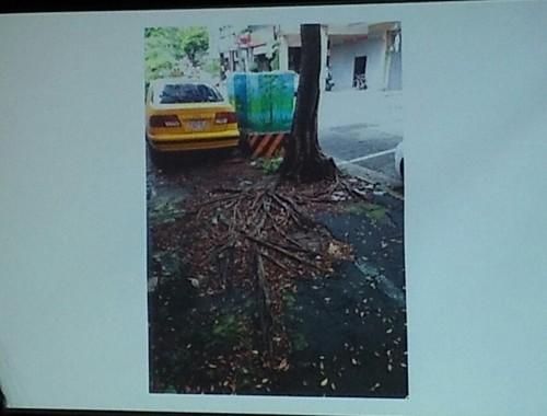Roots on asphalt