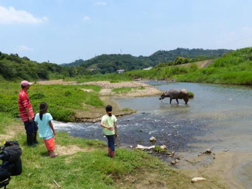 Wasserbüffel Fluss Taiwan